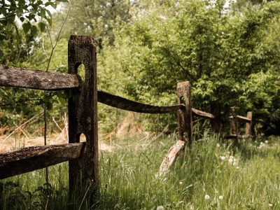 brown wooden fence beside green trees and grass