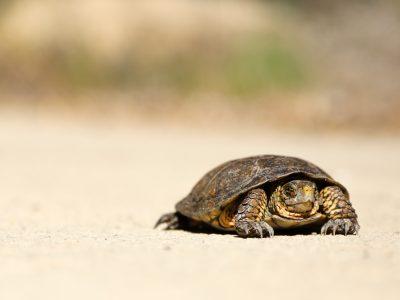 Tortoise on sand.